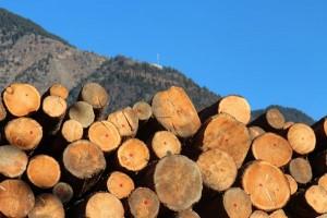 Holz-Web