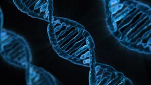 DNA (Bild ist frei)
